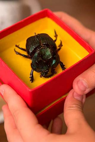 FICI 2016 - O escaravelho do diabo