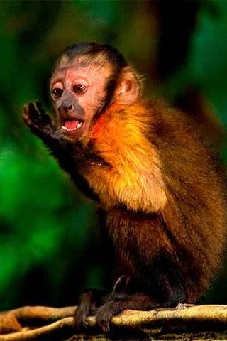 FICI 2016 - O Pequeno Cientista - Amazônia
